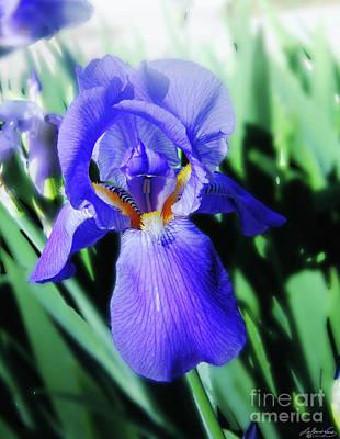 Blue Iris 2 Poster by Lizi Beard-Ward