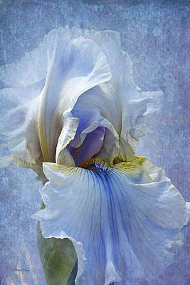 Blue Iris Fog Poster by Phyllis Denton