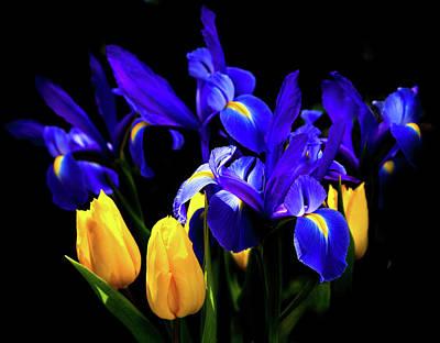 Blue Iris Waltz By Karen Wiles Poster by Karen Wiles