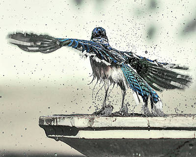 Blue Jay Bath Time Poster