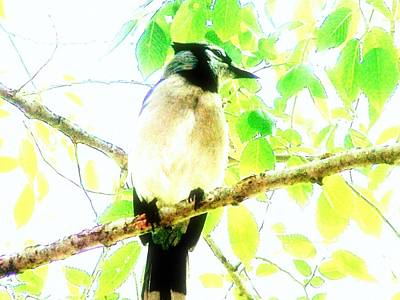 Poster featuring the photograph Blue Jay IIi by Clarice  Lakota