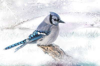 Blue Jay Snow Poster
