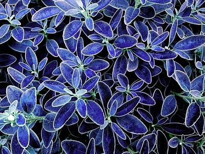 Blue Leaves Poster