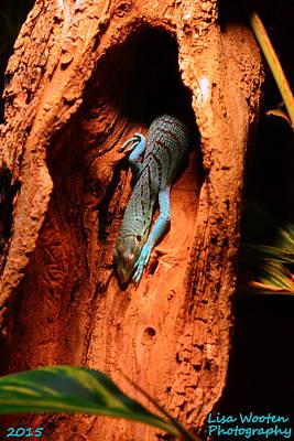 Blue Lizard Poster by Lisa Wooten