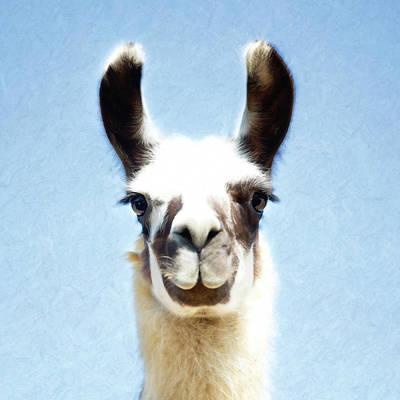 Blue Llama Poster