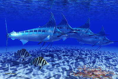 Blue Marlin Pack Poster by Corey Ford