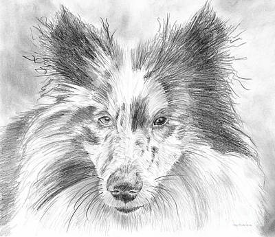 Blue Merle Sheltie Graphite Drawing Poster