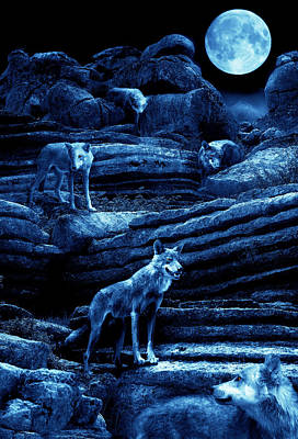 Blue Moon Wolf Pack Poster by Mal Bray