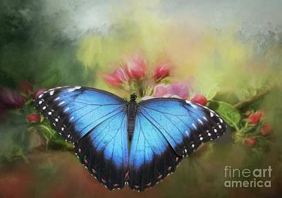 Blue Morpho On A Blossom Poster