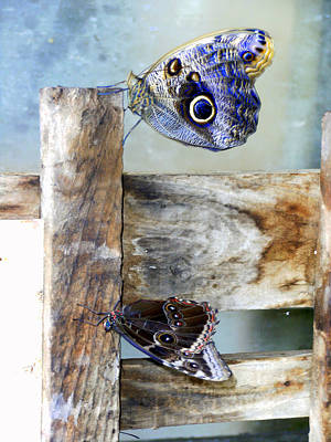 Blue Moths Poster by Mindy Newman