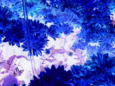 Blue Mums And Water Poster