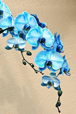 Blue Mystique Orchid Poster by Byron Varvarigos