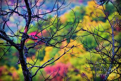 Blue Ridge Autumn Poster