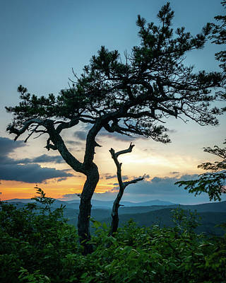 Blue Ridge Mountains Dr. Tree Poster