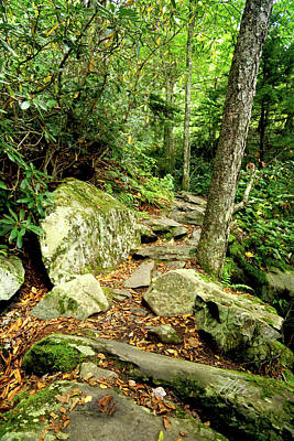 Poster featuring the photograph Blue Ridge Parkway Hiking Trail by Meta Gatschenberger