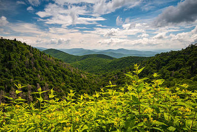 Blue Ridge Parkway Nc Summer Flowers Poster by Dave Allen