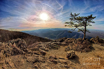 Poster featuring the photograph Blue Ridge Rocky Hilltop And Tree At Sunset by Dan Carmichael