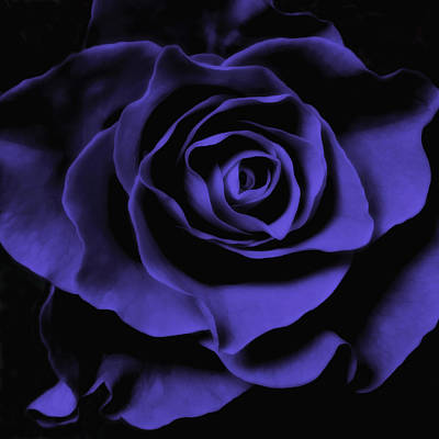 Blue Rose Abstract Art Flower Photograph  Poster by Artecco Fine Art Photography