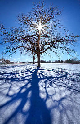 Blue Skies Smiling At Me Poster by Phil Koch