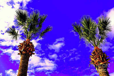 Palms Against Blue Sky Poster