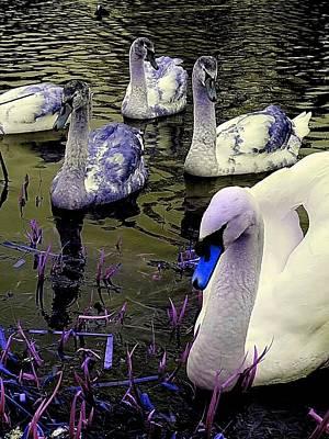 Blue Swan Poster