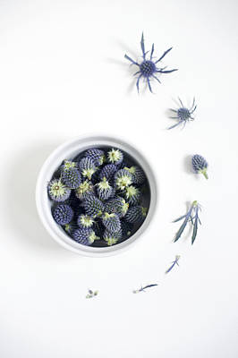 Blue Thistle Still Life Poster