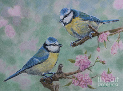 Blue Tits And Cherry Blossom Poster by Elaine Jones