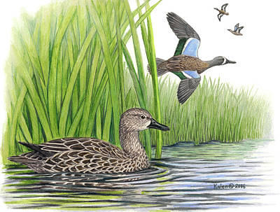 Blue-winged Teal Pairs Poster by Kalen Malueg