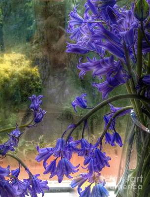 Bluebells In My Garden Window Poster