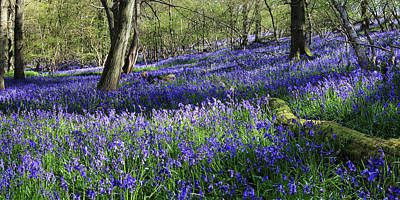Poster featuring the digital art Bluebells by Julian Perry