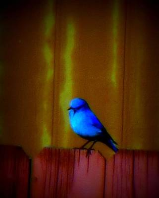Poster featuring the photograph Bluebird Of Happiness by Karen Shackles