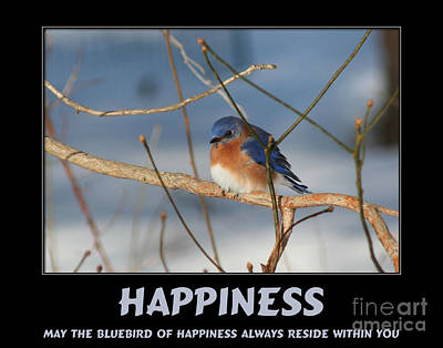 Bluebird Of Happiness Poster by Smilin Eyes  Treasures