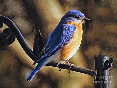 Bluebird Portrait Poster