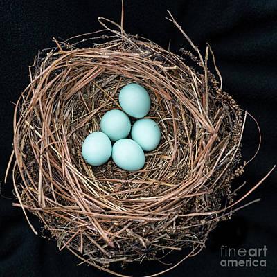 Bluebird's Nest Poster