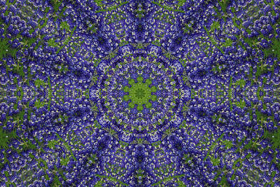 Bluebonnet Lace Kaleidoscope Poster by Robyn Stacey
