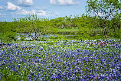 Bluebonnet Pond Poster