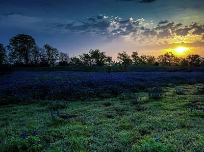 Bluebonnet Sunrise Poster by Mark Alder