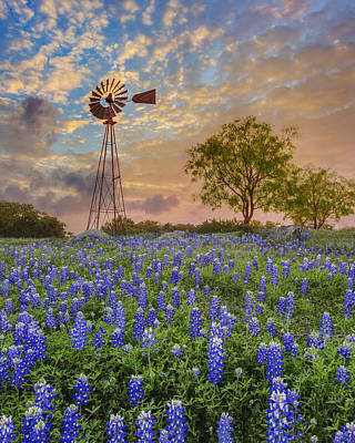 Bluebonnets Beneath A Windmill 2 Poster