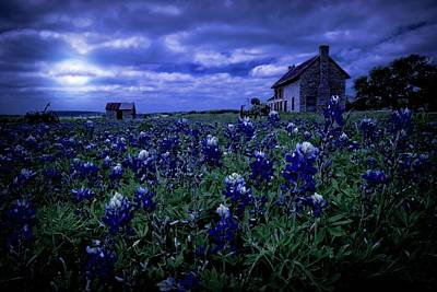 Poster featuring the photograph Bluebonnets In The Blue Hour by Linda Unger