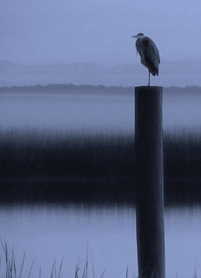 Blues Heron Poster