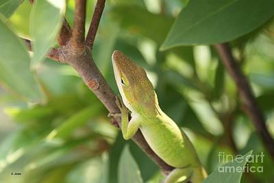 Blusing Lizard Poster