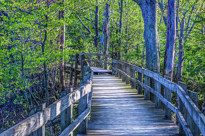 Boardwalk Going Into The Woods Poster