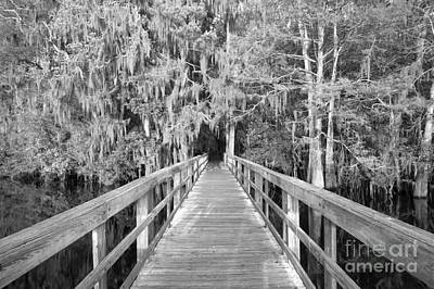 Boardwalk Into The Cypress In Black And White Poster