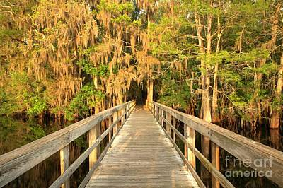 Boardwalk Through The Cypress Poster