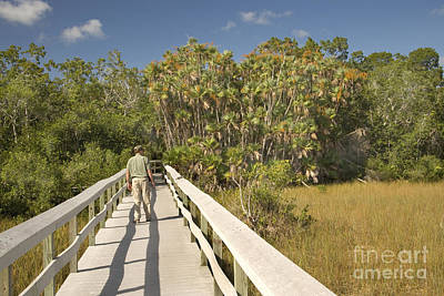 Boardwalk Through The Everglades Poster by Inga Spence