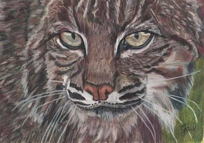 Bobcat Eyes Poster by Gail Seufferlein