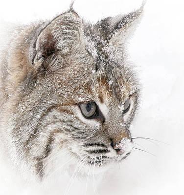 Bobcat Face Poster by Athena Mckinzie