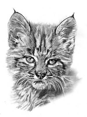 Bobcat Kitten Poster by Reed Palmer
