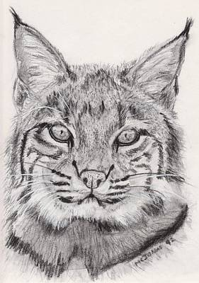 Bobcat Poster by Marqueta Graham