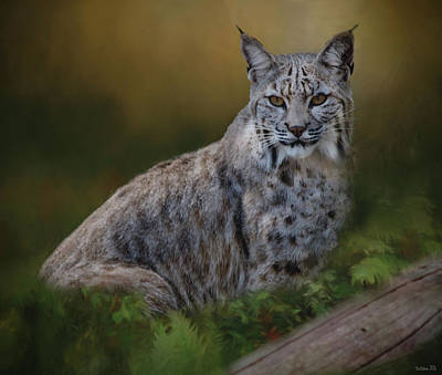Bobcat On Alert Poster by Teresa Wilson